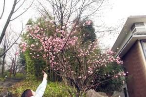 【3月赏花路线】广元到绵阳北川药王谷1日游|广元到北川有多远
