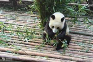 【川行】成都.熊猫基地.九寨沟.黄龙双飞6日游
