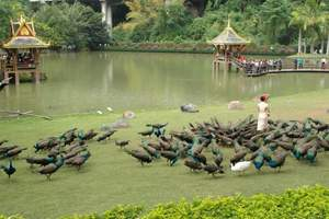 西双版纳原始森林公园+勐泐大佛寺纯玩一日游