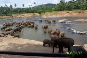 乌鲁木齐到斯里兰卡、狮子岩、加勒古堡8日【美食+国际五星酒店