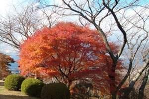 日本自助游/自驾游/攻略/日本北海道+本州浪漫赏枫7天游