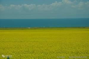 西宁到青海湖豪华一日游    无自费 无购物  送大草原