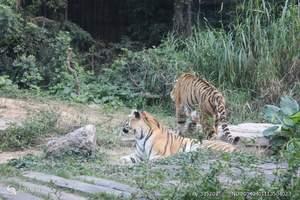 烟台周边 威海神雕山野生动物园一日游 纯玩团 荣成动物园旅游