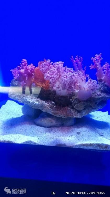 青岛海底世界门票价格_青岛海底世界门票地址1天游