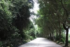 惠州到梅州平远五指石玻璃栈道、松口古镇、叶帅故居、济济楼两天