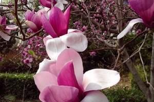 平谷石林峡UFO360°玻璃观景台 赏桃花采摘一日游