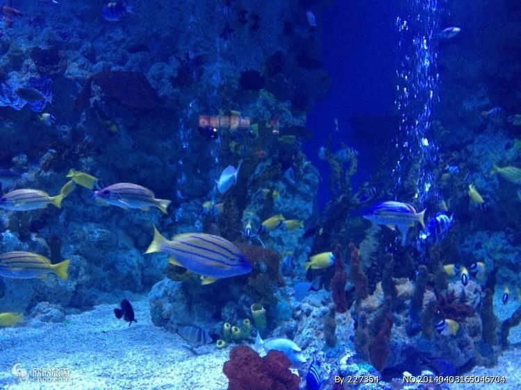壁纸 海底 海底世界 海洋馆 水族馆 桌面 750_562