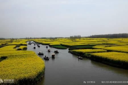 赏花季-青岛去泰州兴化油菜花,夜游凤城河,溱湖湿地大巴2天