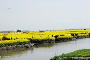 淄博去千岛油菜花、泰州溱湖湿地二日 淄博去兴化油菜花二日游