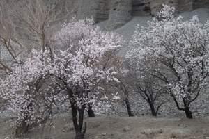 乌鲁木齐出发到伊犁吐尔根杏花赏花4日游 吐尔根杏花开放时间