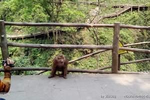 野生动物园
