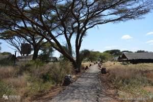 成都四飞迪拜肯尼亚10日游_迪拜+非洲肯尼亚动物大迁徙