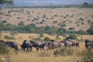 肯尼亚、马达加斯加11天精品团|香港到肯尼亚、马达加斯加旅游