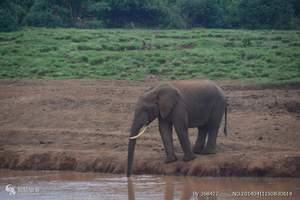 肯尼亚旅游、报团去肯尼亚动物大迁移、肯尼亚10天猎奇之旅