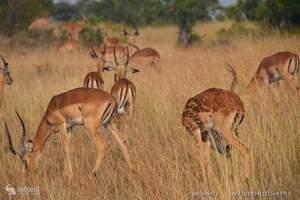 深圳跟团到肯尼亚旅游 肯尼亚旅游费用多少 肯尼亚狂野世界之旅
