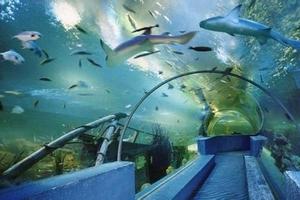 天津到北京动物园旅游特价团_太平洋海底世界_赠皇家游船一日游