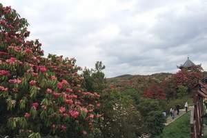 贵州百里杜鹃一日游周末版|毕节玩什么|贵州赏花去哪里|杜鹃花