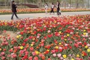 北京国际鲜花港菊花文化节+大运河森林公园一日