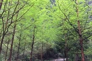 重庆到武隆天坑地缝一日游_重庆周边旅游地缝天坑景点门票是多少