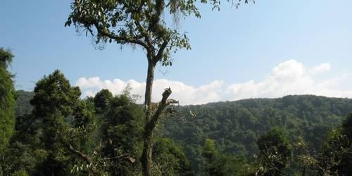 阿莲雅热带雨林