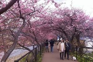 淄博到日本北海道温泉休闲6日(樱花团) 淄博到日本北海道旅游