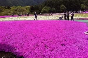 河南郑州直飞|南航进出|郑州到日本赏樱花樱花漫舞全景七日游