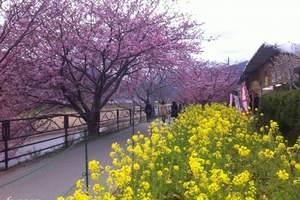 【日本樱花之旅】银川到日本大阪本州岛名古屋全景美食温泉7日游