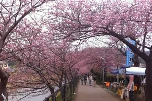 洛阳出发到日本经典赏樱6天(郑州直飞,极致美景,赏樱胜地)