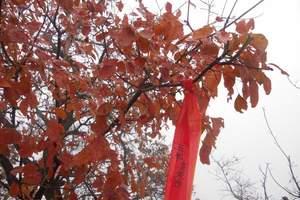 北京到香山红叶户外休闲一日游_去香山看红叶_北京香山一日游