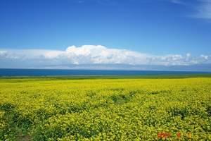 西宁到青海湖、茶卡盐湖、祁连卓尔山、门源油菜花海纯玩3日游