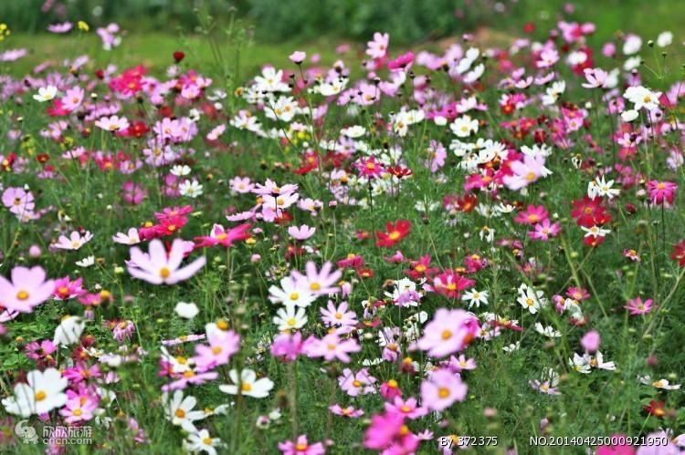 园博苑图片