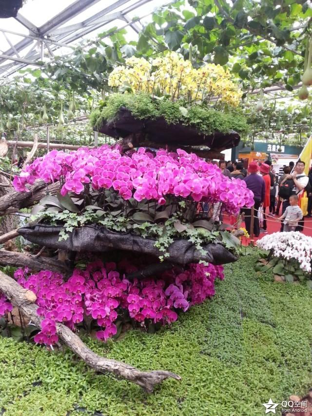 中国寿光国际蔬菜科技博览会门票 寿光菜博会门票