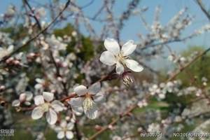 【周末合肥周边一日游,周末假期短途旅游】扬州大明瘦西湖一日游