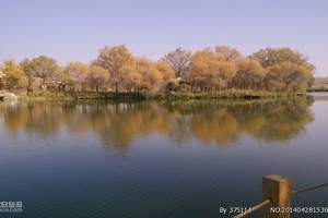 泽普金胡杨国家森林公园一日游