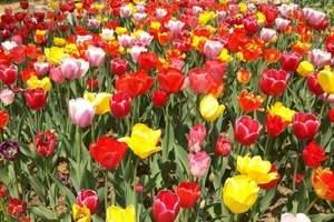 大连英歌石植物园一日游价格表_大连英歌石植物园花期时间表