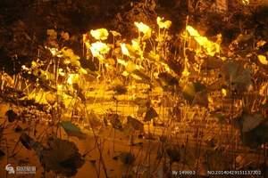杭州西湖之夜