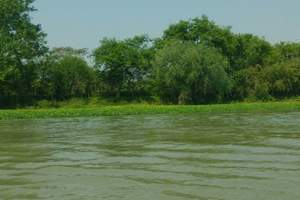 暑期游★杭州西溪国家湿地+船游京杭运河一日游 非诚勿扰拍摄地