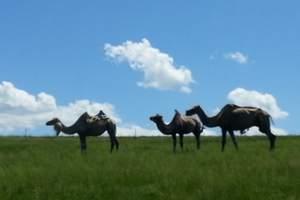 呼伦贝尔大草原、根河敖鲁古雅、莫尔道嘎森林公园、满洲里4日自