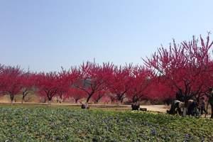 大连英歌石植物园一日游|英歌石植物园门票团购|英歌石旅游攻略