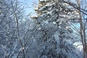哈尔滨到雪乡户外穿越3日游 东升雪谷穿越中国雪乡亚布力滑雪