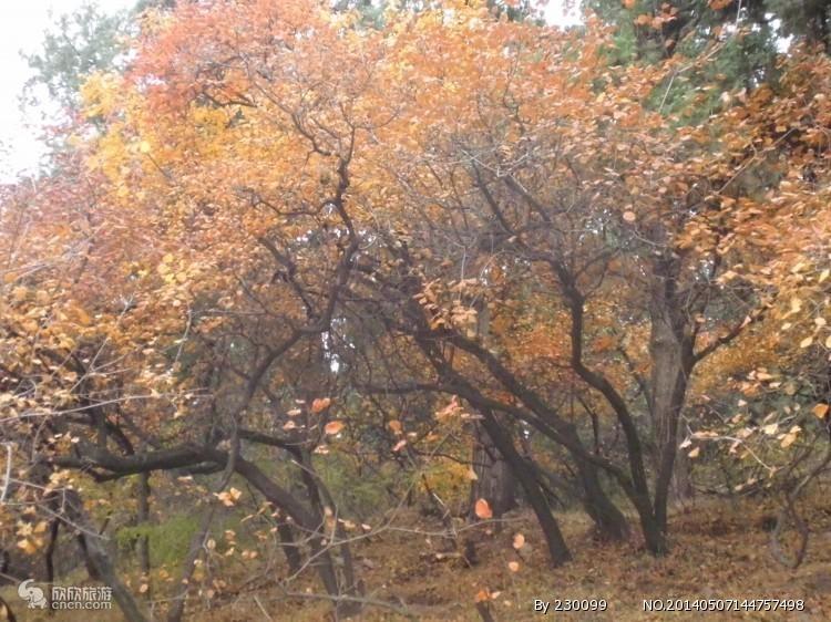 香山公园图片