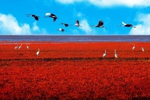 天津到盘锦红海滩旅游_笔架山_葫芦山庄_宁远古城汽车小三日游