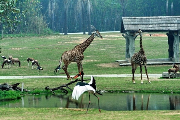 长隆野生动物园门票价格