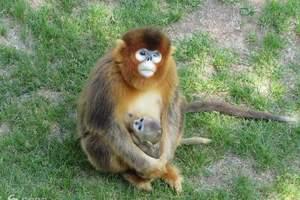 威海到西霞口神雕山动物园旅游含隆霞湖自驾一日游门票