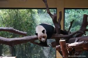 广东-广州长隆野生动物世界、欢乐世界、飞鸟乐园高铁三日游