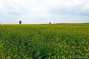 呼和浩特散客拼团:内蒙古大草原一日游/呼和浩特周边好玩的草原