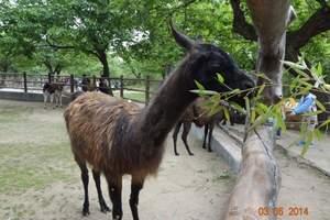 秦岭野生动物园成人票
