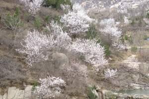 (公司独立包团)平谷金海湖+大峡谷爬山玩水2日游线路价格