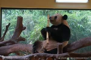 广州番禺长隆野生动物世界全球唯一大熊猫三胞胎一天游
