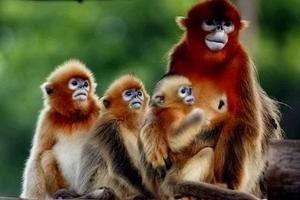 青岛去威海旅游推荐_西霞口野生动物园、神游海洋世界二日游